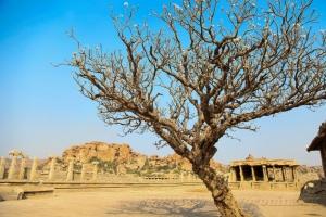 Храмовое дерево