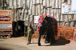 Священный слон