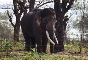 Грозный слон