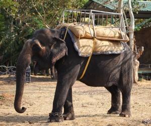 Головой кивает слон...)