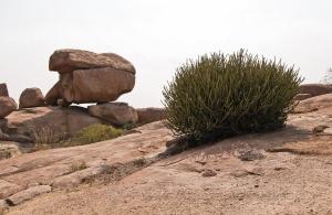 Повсюду камни